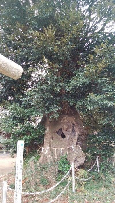一ノ矢八坂神社の近くの神社お寺|神塚神社