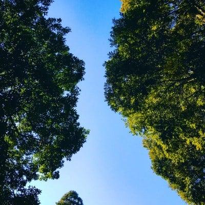 諏訪神社の自然