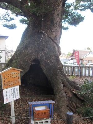 細江神社の自然