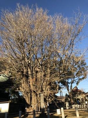 葛飾八幡宮の自然