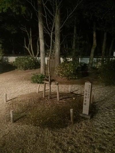 六所神社(愛知県東岡崎駅) - 自然の写真