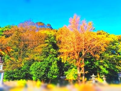 白山社(小鈴谷白山神社)の自然