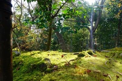 常寂光寺の自然