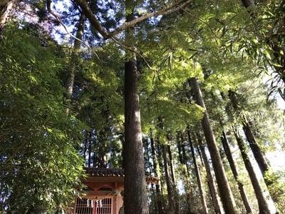 千葉県白山神社の写真