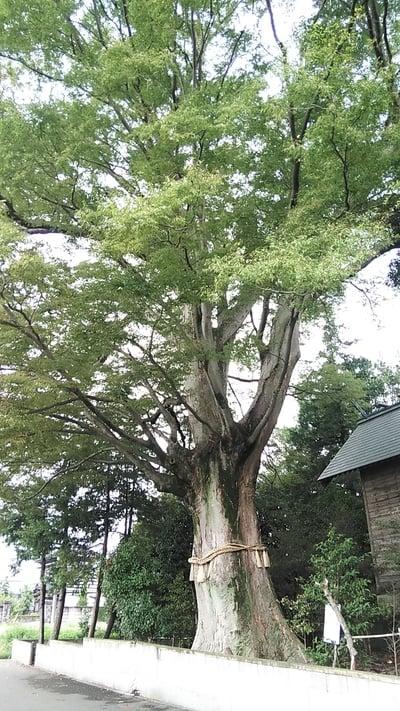 千葉県香取神社(関宿香取神社)の写真