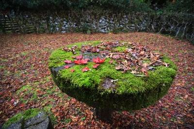 島根県鰐淵寺の庭園