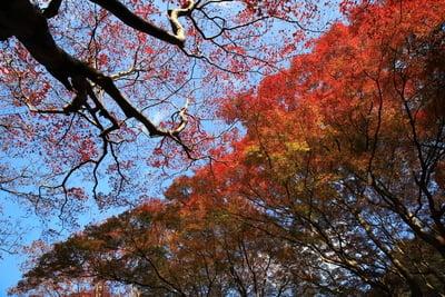 島根県鰐淵寺の写真
