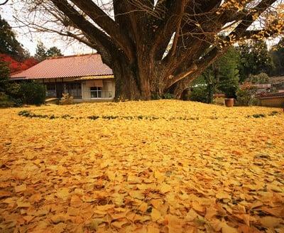 浄善寺の写真