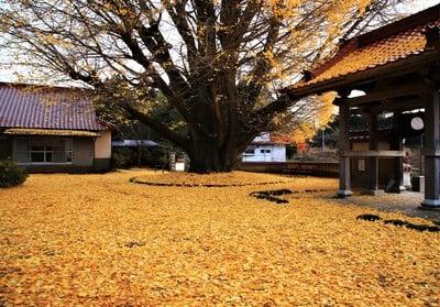 浄善寺(島根県粕淵駅) - 未分類の写真