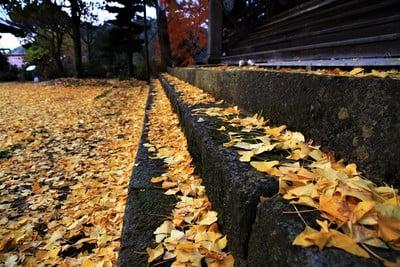 浄善寺(島根県粕淵駅) - その他建物の写真