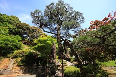 竜雲寺(島根県三保三隅駅) - 庭園の写真