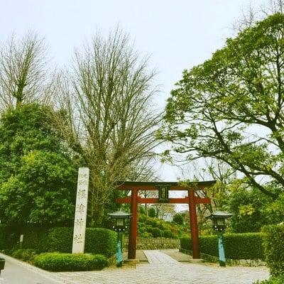 東京都根津神社の鳥居
