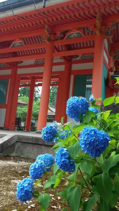 兵庫県出石神社の本殿