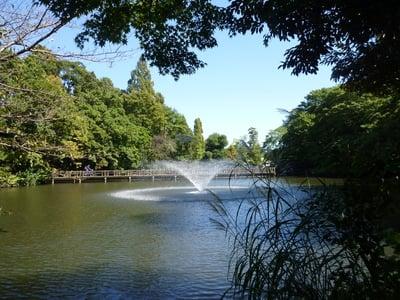 東京都井の頭弁財天の庭園