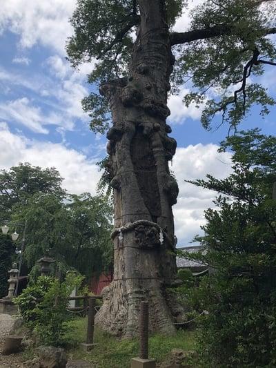 埼玉県廣瀬神社の写真