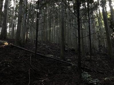八坂神社の近くの神社お寺|龜山神社