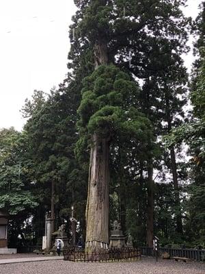 戸隠神社中社の自然