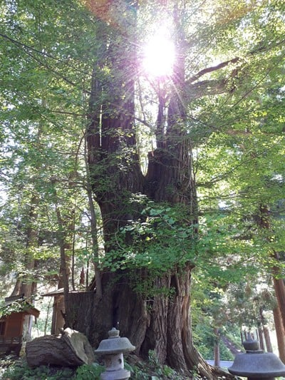 恵光院の自然