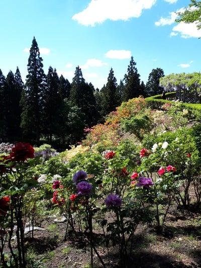 恵光院の庭園