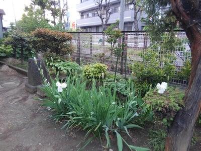 埼玉県稲荷神社の庭園