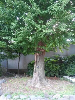 東京都天祖神社の自然