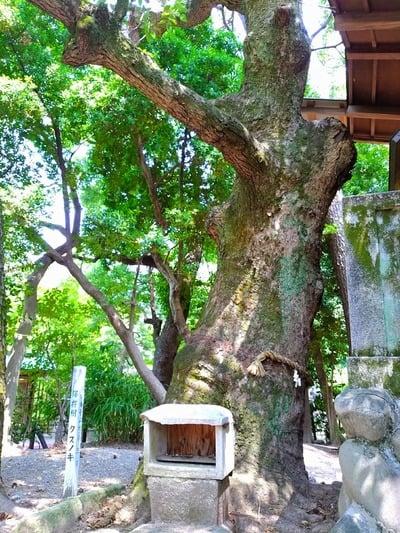 豊國神社の近くの神社お寺|八幡社