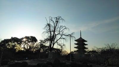 東寺(教王護国寺)(京都府東寺駅) - その他の写真