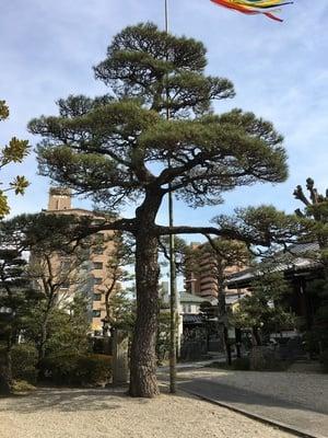 松秀寺の自然