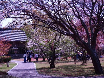 長崎県亀岡神社の写真