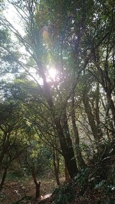 大分県白山神社の写真