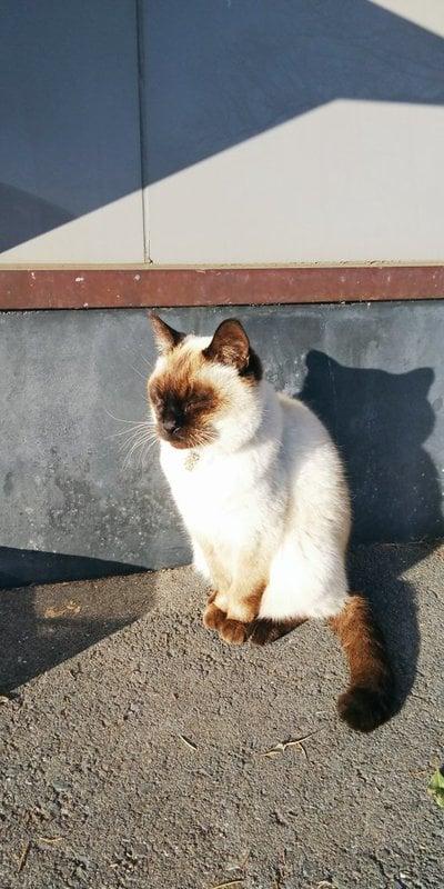 鹿島御児神社の動物