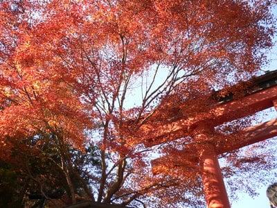 東京都高尾山薬王院有喜寺の鳥居