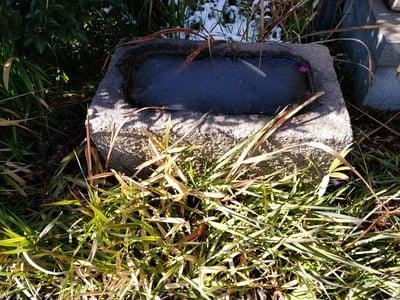 清養山 正音寺の手水