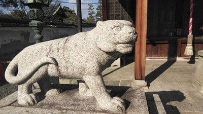 両足院(建仁寺塔頭)(京都府祇園四条駅) - 狛犬の写真