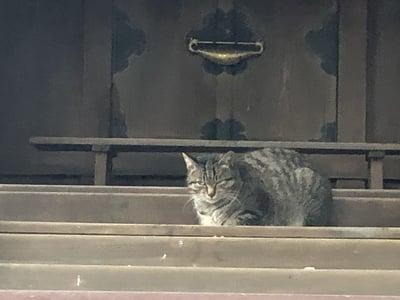 大依羅神社(大阪府あびこ駅) - 動物の写真