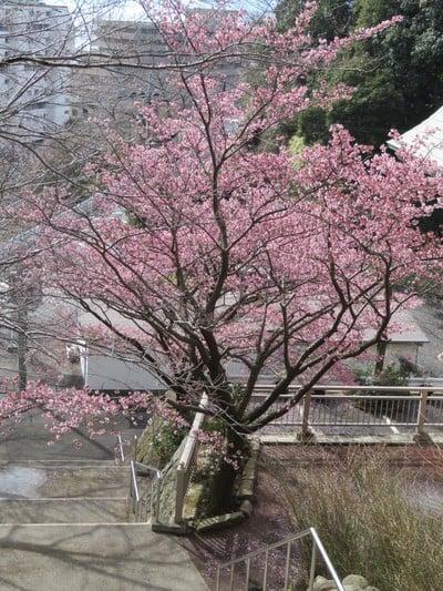 身代り不動尊(大明王院)(静岡県熱海駅) - 周辺の写真