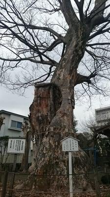 日隅神社の自然