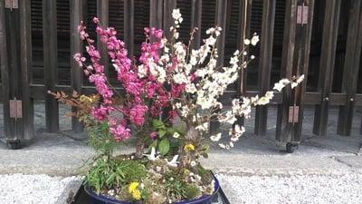 本法寺の庭園
