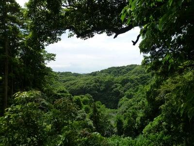 建長寺の自然
