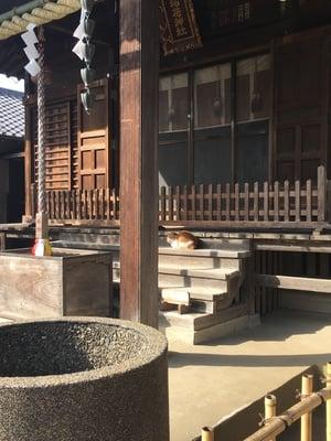 稲荷神社の動物
