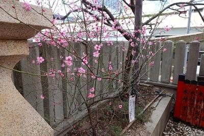 綱敷天神社御旅社の庭園