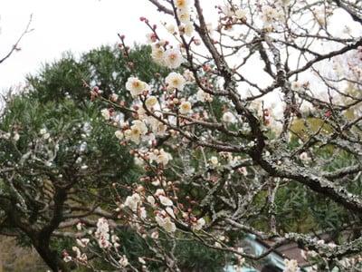 東慶寺の自然