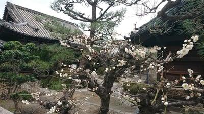 理安寺の庭園