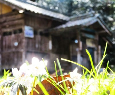 田殿神社(岡山県)