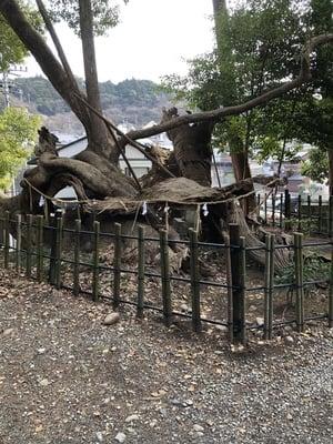 静岡県草薙神社の写真