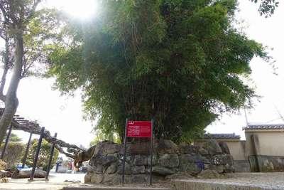 達磨寺の自然