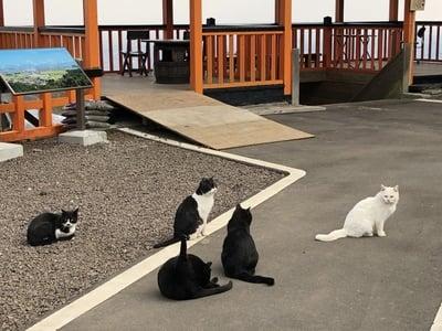 熊野那智神社(宮城県富沢駅) - 動物の写真