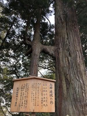 熊野那智神社の自然