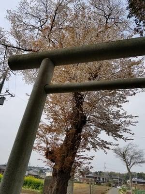 茨城県酒門神社の本殿