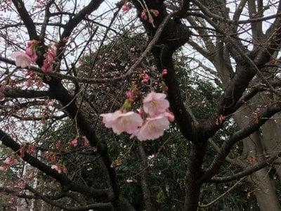 高取神明宮の自然